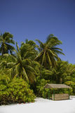 Maldives Beach with small Hut. Maldives beach scene with palms and a small hut Royalty Free Stock Photography