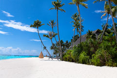 Maldives beach with swings on palm trees Stock Photo