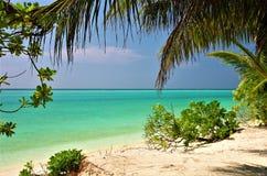 Maldives beach Thoddoo island 2. Maldives beach, white sand, palm tree, turquoise water Royalty Free Stock Images