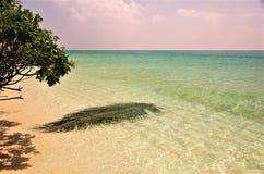 Maldives beach Thoddoo island 3. Maldives beach, white sand, palm tree, turquoise water Stock Image