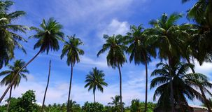 Maldives beautiful background with palm trees on sunny tropical paradise island stock video