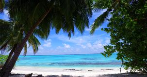 Maldives beautiful white sandy beach background with palm trees on sunny tropical paradise island with aqua blue stock footage