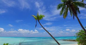 Maldives beautiful white sandy beach background with palm trees on sunny tropical paradise island with aqua blue stock video