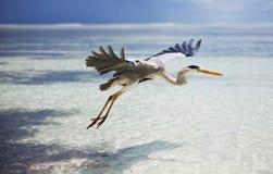 Maldives bird Royalty Free Stock Photography