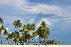 The Maldives coast of palm trees Stock Photography