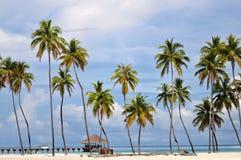 The Maldives coast of palm trees Royalty Free Stock Photo