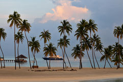 The Maldives coast of palm trees Stock Images