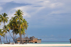 The Maldives coast of palm trees Stock Photo