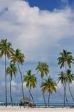 The Maldives coast of palm trees Stock Photos