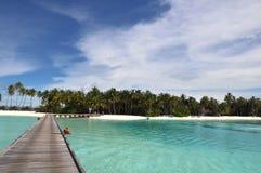 The Maldives coast of palm trees Royalty Free Stock Photography