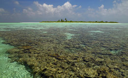 Maldives - Coral Reef - South Ari Atoll Royalty Free Stock Images