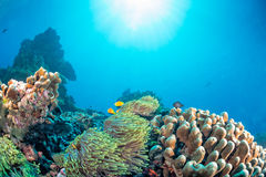 Maldives corals house for Fishes Royalty Free Stock Photos