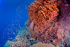 Maldives corals house for Fishes Stock Image