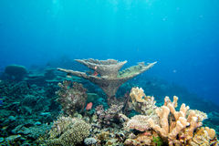 Maldives corals house for Fishes Royalty Free Stock Photography