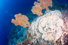 Maldives corals house for Fishes Stock Photos