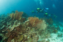 Maldives corals house for Fishes Stock Images