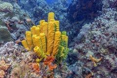 maldives Die launenhaften Korallenriffe des Regals lizenzfreie stockfotografie