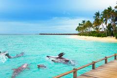 Maldives. Dolphins at ocean and tropical island. Landscape Royalty Free Stock Photography