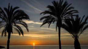 Maldives, drzewko palmowe, zmierzchu widok Lato natury scena Zdjęcie Stock