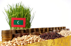 Maldives flag waving with stack of money coins and piles of wheat Stock Images