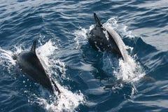 Maldives-Insel Lizenzfreie Stockfotos