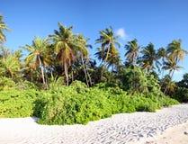 Free Maldives Island Royalty Free Stock Photos - 3674618