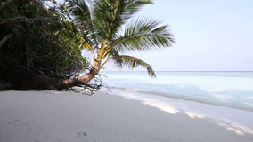 Maldives island stock footage