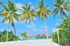 Maldives island and palm tree Stock Images