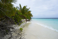 Maldives island with sandy beach, palm trees Stock Images