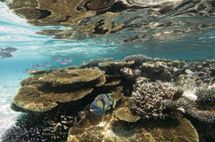 Maldives - Korallenriff Stockbild