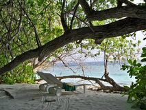 Maldives loungers under the trees royalty free stock images
