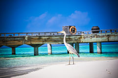 Tropical bird at Maldives royalty free stock photos