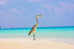 Tropical bird at Maldives stock image