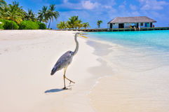 Tropical bird at Maldives stock photography