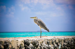 Tropical bird at Maldives stock images