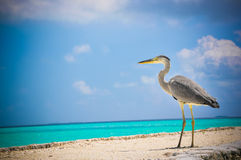 Tropical bird at Maldives stock photo