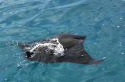 maldives manty Obrazy Stock
