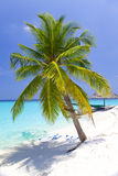 Maldives.   Palm tree bent above waters of ocean. Royalty Free Stock Photography