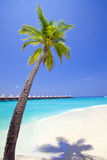 Maldives.   Palm tree bent above waters of ocean. Stock Photo