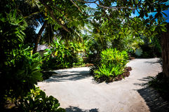 Maldives palm trees Royalty Free Stock Images