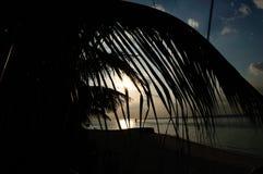 Maldives plaży palmy Obrazy Royalty Free