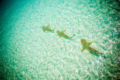 Maldives reef sharks 4 stock photo