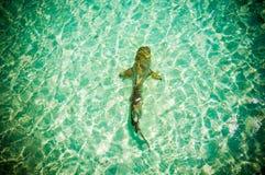 Maldives  reef sharks 6 Royalty Free Stock Photography