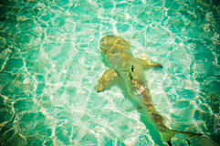 Maldives  reef sharks 11 Stock Photo