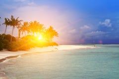 Maldives. A sandy beach, palm and sea coast.  Stock Photography
