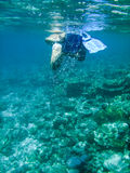 Maldives. Snorkeling on the barrier reef at Maldives Stock Photography