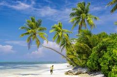 Maldives - sunny tropical beach Stock Photos