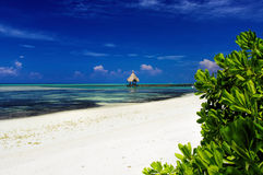 Maldives - sunny tropical lagoon Stock Images