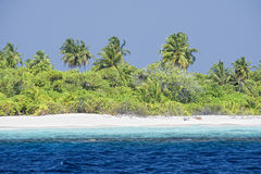 Maldives tropical paradise beach crystal water coconut tree island Stock Image