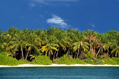 Maldives tropical paradise beach crystal water coconut tree island Royalty Free Stock Image